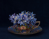 2020_05 May Scilla