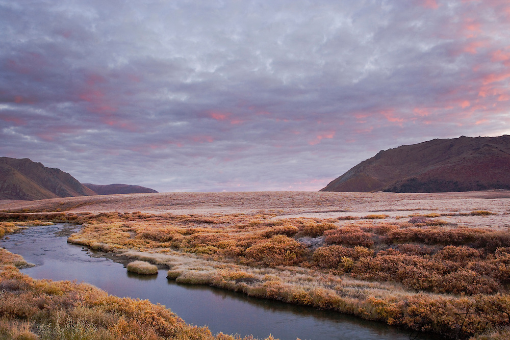 Cirrus clouds illuminated at sunrise float above the autumn landscape of the Ogilvie Mountains' tundra covered in frost, Yukon Territory, Canada