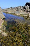 Rock Pool - St Mary's, Isles of Scilly