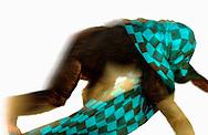 Deutschland, DEU, Krefeld, 2004: Projekt ueber die biologischen Wurzeln der Mode. Die Shootings hierfuer wurden mit Grossen Menschenaffen, die dem Menschen am naechsten sind, im Krefelder Zoo gemacht. Die Tiere waren weder zahm noch trainiert. Die Kleidungsstuecke wurden in die Gehege geworfen und was immer die Tiere damit anstellten, taten sie aus sich selbst heraus. Ein Eingreifen oder gar eine Regie war unmoeglich. Da das Verhalten der Affen im Mittelpunkt stand, wurden die Hintergruende von den Originalfotografien entfernt. Das junge Schimpansen-Maennchen Manni mit einem Halstuch von René Lezard. | Germany, DEU, Krefeld, 2004: Project to look at the basics and roots of fashion. The shootings took place in the Zoo Krefeld with three species of Great Apes who are the nearest to us. The animals were neither tamed nor trained. Whatever the animals did, they did on their own. Any intervention or directing was impossible. To set the focus on the behaviour of the animals itself we removed the background from the original photographs. Chimpanzee (Pan troglodytes), young male Manni with scarf from René Lezard. |