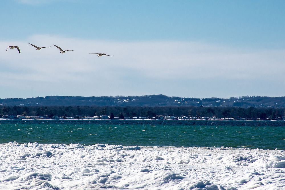 Geese In Flight Over Lake Michigan