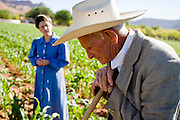 "June 16, 2008 -- COLORADO CITY, AZ: JOSEPH JESSOP, 86 years old, leans against his hoe while weeding a corn field in Colorado City, AZ. Jessop, a polygamist and member of the FLDS, was arrested during the Short Creek Raid in 1953 and had his wives and children taken from him for two years. Colorado City and neighboring town of Hildale, UT, are home to the Fundamentalist Church of Jesus Christ of Latter Day Saints (FLDS) which split from the mainstream Church of Jesus Christ of Latter Day Saints (Mormons) after the Mormons banned plural marriage (polygamy) in 1890 so that Utah could gain statehood into the United States. The FLDS Prophet (leader), Warren Jeffs, has been convicted in Utah of ""rape as an accomplice"" for arranging the marriage of teenage girl to her cousin and is currently on trial for similar, those less serious, charges in Arizona. After Texas child protection authorities raided the Yearning for Zion Ranch, (the FLDS compound in Eldorado, TX) many members of the FLDS community in Colorado City/Hildale fear either Arizona or Utah authorities could raid their homes, in the same way. Older members of the community still remember the Short Creek Raid of 1953 when Arizona authorities using National Guard troops, raided the community arresting the men and placing women and children in ""protective"" custody. After two years in foster care, the women and children returned to their homes. After the raid, the FLDS Church eliminated any connection to the ""Short Creek raid"" by renaming their town Colorado City in Arizona and Hildale in Utah.   Photo by Jack Kurtz"