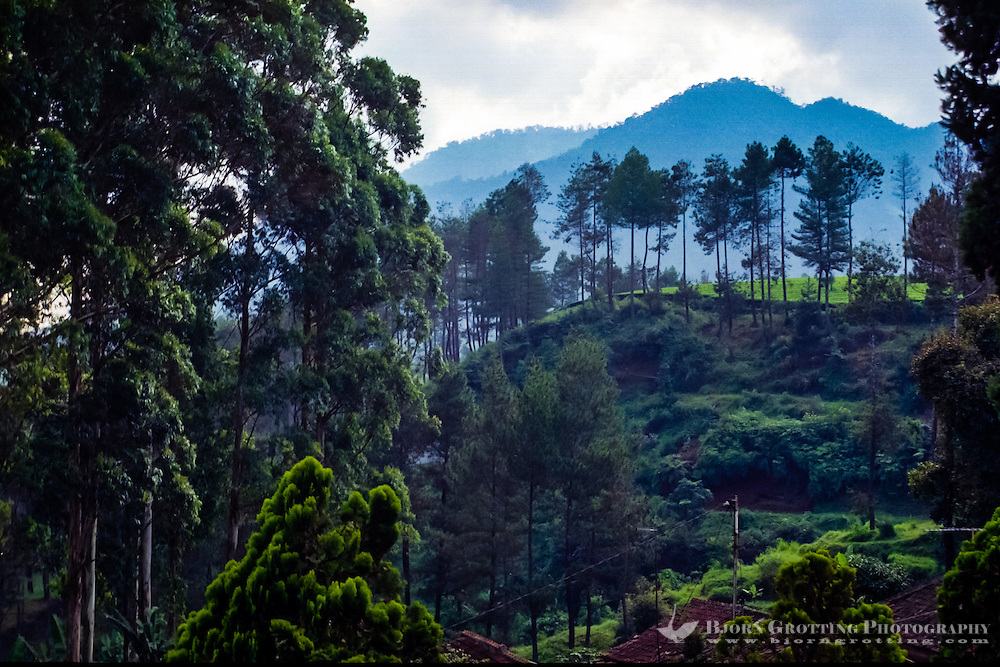 Indonesia, Java, Cisarua. Landscape in the hills above Bandung.
