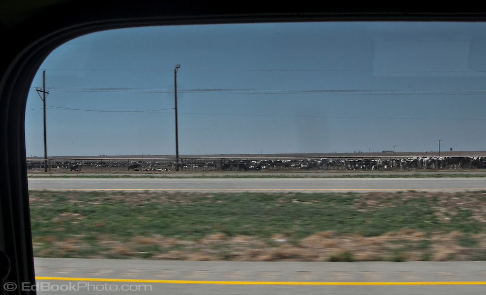 a stockyard with cattle along rural flat west Texas Interstate 20  framed by a Mini Cooper automobile window