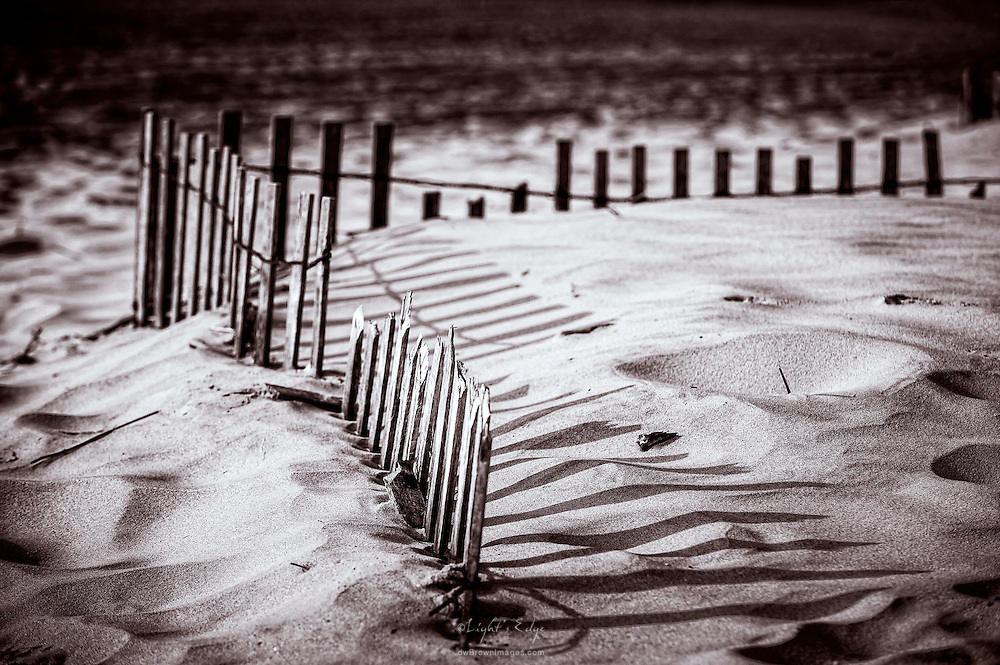 Though deteriorating itself,snow fencing used to help rebuild and retain sand dunes shows its effectiveness.