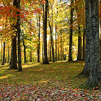 """""""Through the Light""""<br /> <br /> Ah, the wonderful feel of autumn sunlight as it comes through the trees, bringing to life the gorgeous colors of fall!!<br /> <br /> Autumn Landscapes of Michigan by Rachel Cohen"""