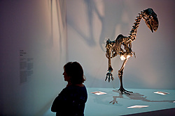 Stock photo of a woman reading about the Diatryma (Giant Bird) on display at the new Paleontology Hall at the Houston Museum of Natural Science