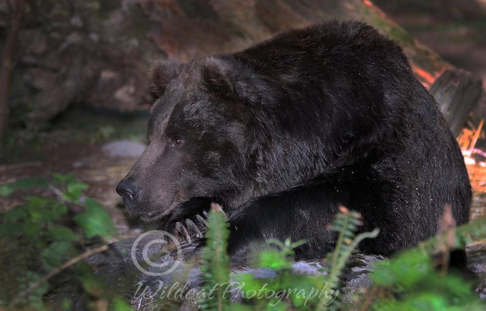 Bear Prayer