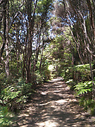 Regenerating forest at the Tāwharanui Regional Park north of Auckland.