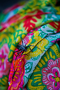 Large beetle crawling on a fabric with bright colourful patterns.