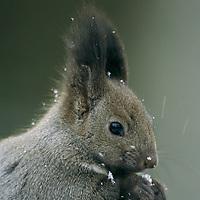 Japan's Winter Wildlife