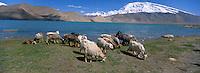China. Sinkiang (Xingiang) province. Karakul lake and Mustagatah mount. Between Tashkorgan and Kashgar. // Chine. Province du Sinkiang. Lac Karakul et mont Mustagatah.