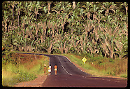 BRAZIL 20107: BABASSU PALM