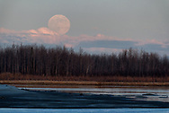The May Full Moon - The Flower Moon - rises over the Tanana River in Nenana, Alaska on May 6, 2020.