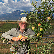 Edward Tuft stands in his apple orchard in Hotchkiss, Colorado. Over the past couple of years Tuft has replaces his traditional orchard with trees that are pruned smaller and closer together, which makes harvesting less labor intensive. Nathan Lambrecht/Journal Communications