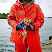 Fisherman Blair MacKinnon holding langoustines (Scottish prawns) at Dunvegan Harbour on the Isle of Skye, Scotland, UK. He is one of the local suppliers used by The Three Chimneys Restaurant in Colbost.