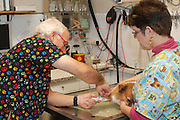 Vet's prepare a dog for surgery inserting an infusion in the dog's leg