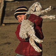 Mongolia. ADIA family , nomad and cattle breeder  near Hotont in Orkhon valley in winter  arkangai      /    / La famille ADIA, eleveur nomade pres de Hotont dans la valle de l'Orkhon en hiver   arkangai  Mongolie     / children playing with goat