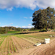 Panorama of a farm in Towamba in rural New South Wales, Australia.