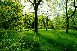 The Arboretum with trees and grass at Berlin Botanical Garden in Dahlem, Berlin, Germany