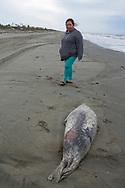Alice Attatayuk tittar på en död säl på stranden i Shishmaref. Alaska, USA<br /> <br /> Fotograf: Christina Sjögren<br /> <br /> Photographer: Christina Sjogren<br /> Copyright 2018, All Rights Reserved