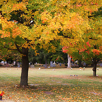 """""""Colors Above"""" <br /> <br /> Beautiful autumn colors above a peaceful resting place!"""