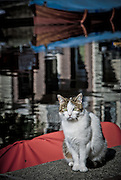 Canal side cat, Amsterdam.