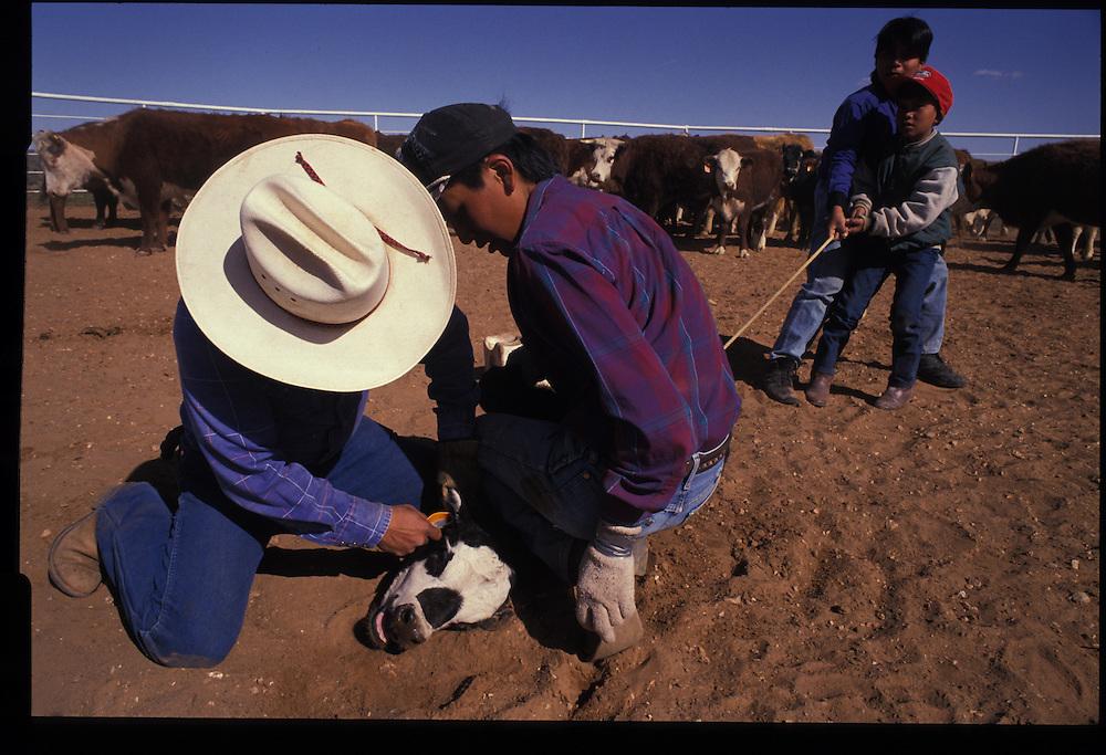 King family roundup.  Bodaway, Arizona  1993