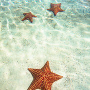 Clear blue water and a set of starfish in the Caribbean.