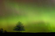 A tree is silhouetted against the glow of the aurora borealis  on a farm in Ulster County, N.Y., after midnight on Nov. 10, 2004.