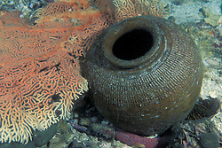 An unexploded bomb, used for blast fishing, lies near a fan coral. While illegal in most countries, this unsustainable fishing method is widespread and difficult to control. Blast fishing destroys delicate habitats and kills huge quantities of fish. Only the most valuable species are collected for market; the vast majority are wasted, left to rot on the bottom. Mergui Archipelago, Myanmar, Andaman Sea