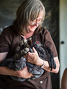 26 JUNE 2019 - CENTRAL CITY, IOWA: Dr. KATHY ROSS, DVM, inspects a rabbit at the rabbit check station at the Linn County Fair. Summer is county fair season in Iowa. Most of Iowa's 99 counties host their county fairs before the Iowa State Fair, August 8-18 this year. The Linn County Fair runs June 26 - 30. The first county fair in Linn County was in 1855. The fair provides opportunities for 4-H members, FFA members and the youth of Linn County to showcase their accomplishments and talents and provide activities, entertainment and learning opportunities to the diverse citizens of Linn County and guests.         <br /> PHOTO BY JACK KURTZ