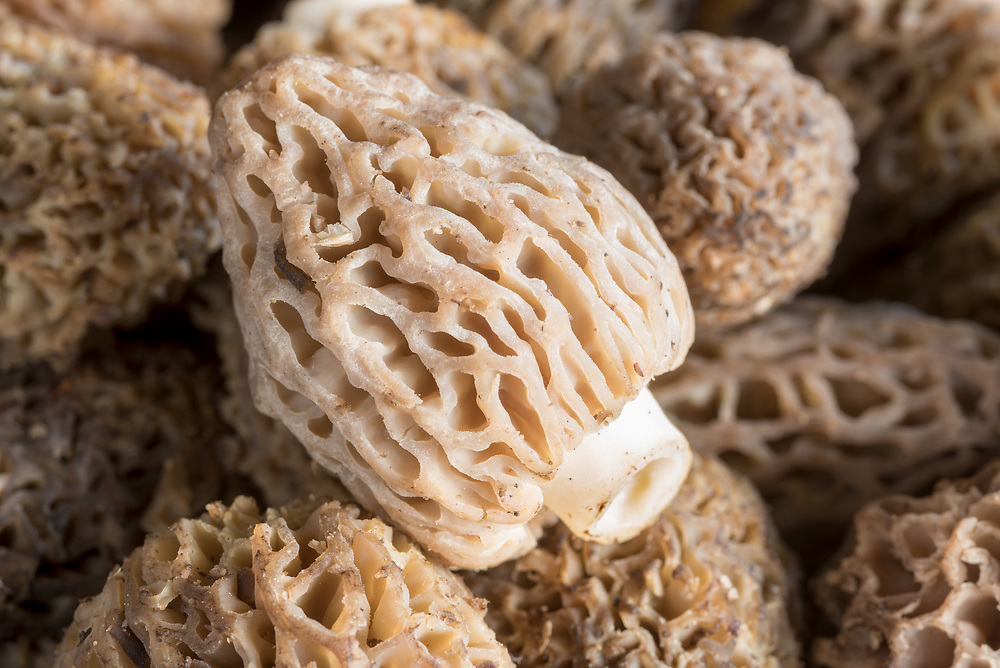 Morel mushrooms from the mountains of Eastern Oregon.