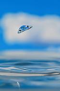Macro Water Drop