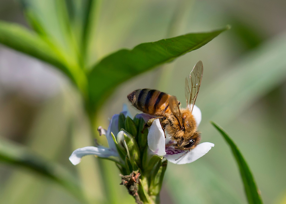 Diving In To Pollinate