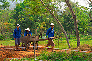 Chan May,  MySon, Vietnam -- March 22, 2016. Vietnamese workers toil in the gardens  of  My Son, in Vietnam.