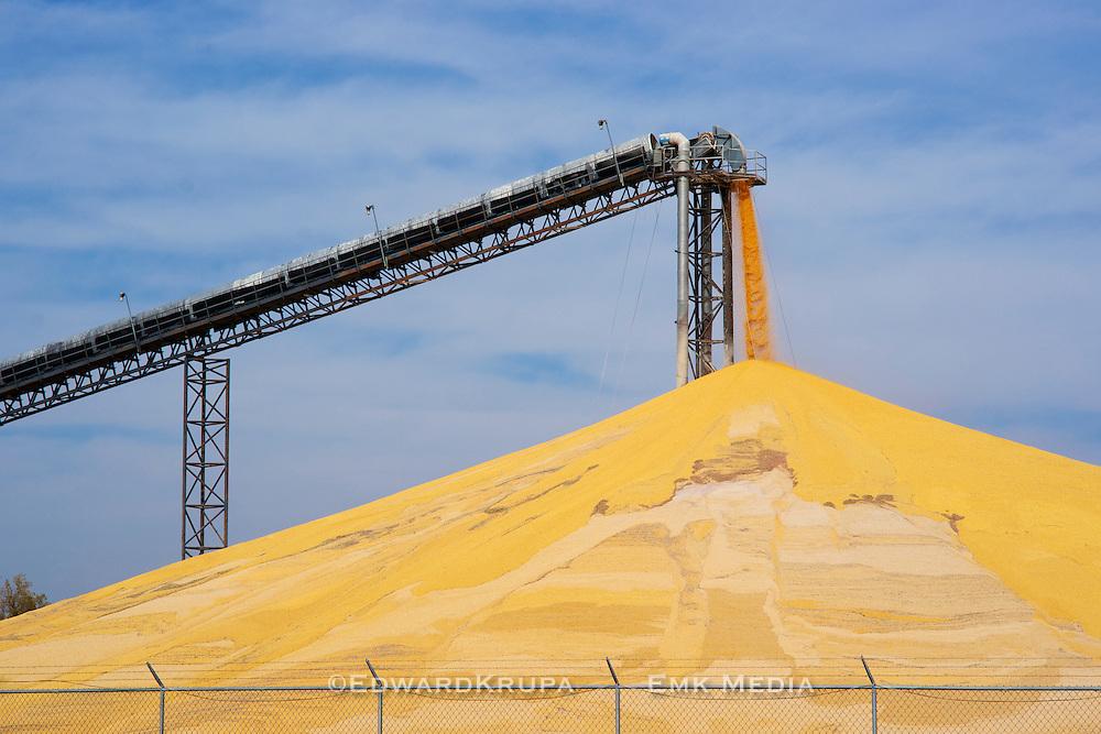 Conveyor and a large stockpile of harvested corn, Nebraska, USA.