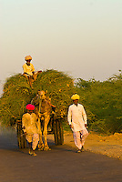 Men and their camel cart on road near Rohet, Rajasthan, India