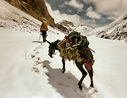 Donkey G is exhausted with the added effect of altitude and a month-long on the road - we decide to take our backpacks off him. Going over the 4925m Irshad Uween pass, the border between Afghanistan and Pakistan, in our last days trek..<br /> <br /> Adventure through the Afghan Pamir mountains, among the Afghan Kyrgyz and into Pakistan's Karakoram mountains. July/August 2005. Afghanistan / Pakistan.