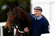 Bequest ridden by David Probert and trained by Ron Hodges in the Avon Valley Cleaning And Restoration Handicap race.  - Ryan Hiscott/JMP - 06/05/2019 - PR - Bath Racecourse- Bath, England - Kids Takeover Day - Monday 6th April 2019