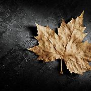 A golden textured leaf, shot against a dark background.