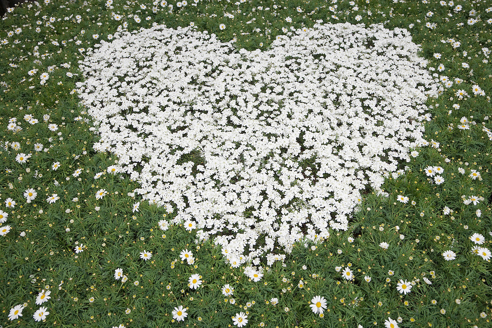 heart created in a flower bed