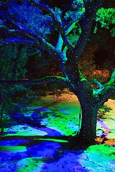 Santa Fe Botanical Gardens Glow event
