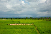 A large green rice paddy field from Teknaf Highway, near Cox Bazar, Chittagong Division, Bangladesh, Asia.  On the horizon is the hill range within Myanmar that many Rohingya people had to cross during the Rakhine crisis in 2017. The sky is dark and overcast with clouds.