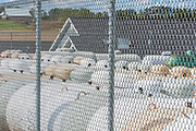 Used propane tanks in a storage area enclosed by a chain link fence, morning light, October, Kalkaska County, Michigan, USA