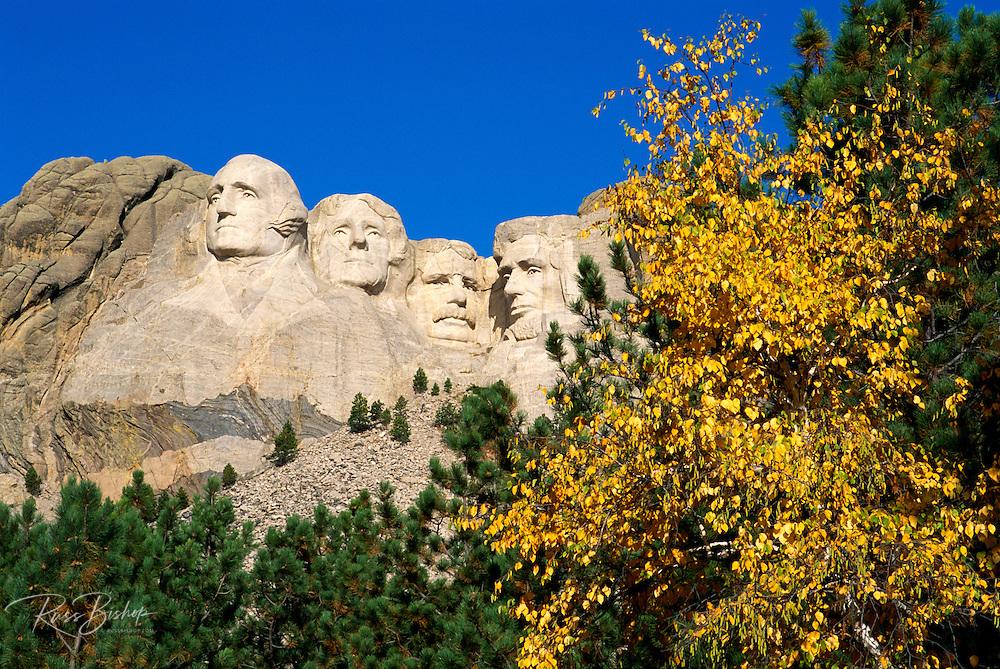 Mount Rushmore and fall color, Mount Rushmore National Memorial, South Dakota USA