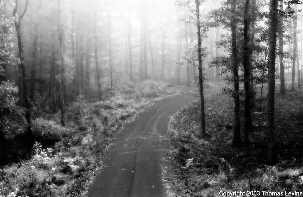Black & White infrared photograph of a wooded area close to Blairsville Georgia during the fall of 2003.