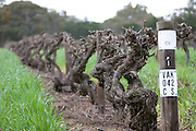 Penfolds Wine Barossa Valley.Block 42 Cabernet Sauvignon,winter, photography by paul green