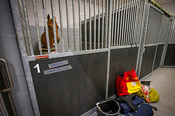Casello waiting in his stable for departure at the Schiphol Animal Center<br /> Departure of the horses to the World Cup Finals in Las Vegas from Schiphol - Amsterdam 2015.<br />  © Hippo Foto - Dirk Caremans