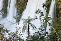 CATARATAS DEL IGUAZU, SALTOS Y VEGETACION CON PALMERA, PASEO SUPERIOR, PARQUE NACIONAL IGUAZU, PROVINCIA DE MISIONES, ARGENTINA (© MARCO GUOLI - ALL RIGHTS RESERVED)